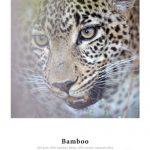 Carta Bamboo